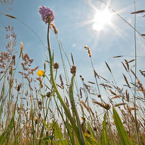 Kruidenrijk grasland met gevlekte orchis (Drenthe) 19mm, 1/250s, f27, ISO 400, Camera op de grond en hoekzoeker.