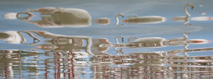 Indirect fotograferen (in dit geval de reflectie van flamingo's op het golvende water) levert vaak verrassende nieuwe beelden op en leert je anders te kijken. 36 mm, 1/175s, f11, ISO 200, Foto: Bart Siebelink