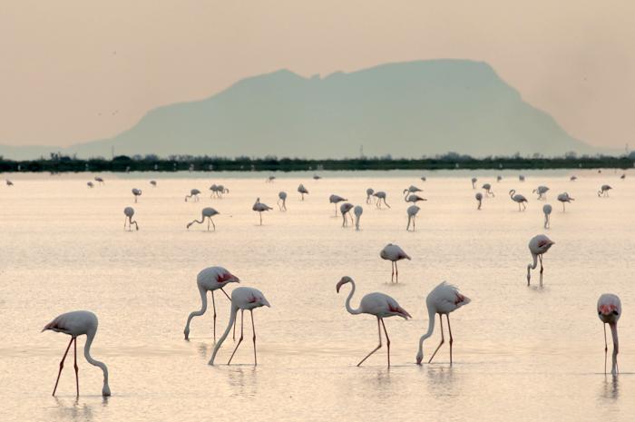 Flamingo's in ochtendlicht. 500 mm, 1/60s, f32, ISO 200, statief. Foto: Bart Siebelink