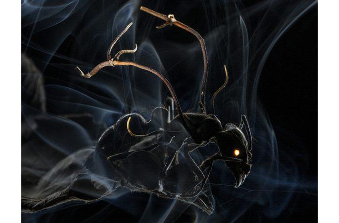 Winnende World Press foto in categorie Nature van Anand Varma. Een mier die is geïnfecteerd door de schimmel Ophiocordyceps. In deze foto komen biologische kennis, observatie, creativiteit en fotografische techniek op sublieme wijze samen.