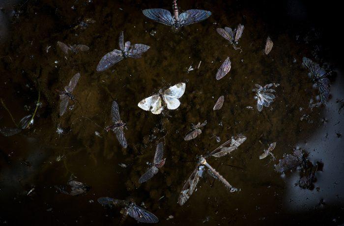 Dode insectjes drijvend in een donkere poel. Wat heb je nodig om hier een onderwerp in te zien?