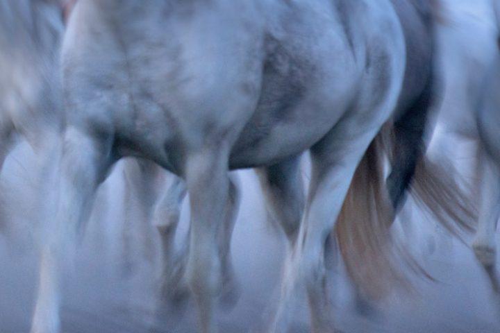 Bewegen met de camera, je krijgt fraaie kansen met paarden.