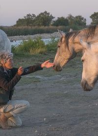 paarden200©BartSiebelink-15