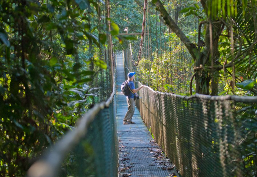Waarnemen vanaf de hangbrug, een heerlijke bezigheid. Foto: Edo van Uchelen.