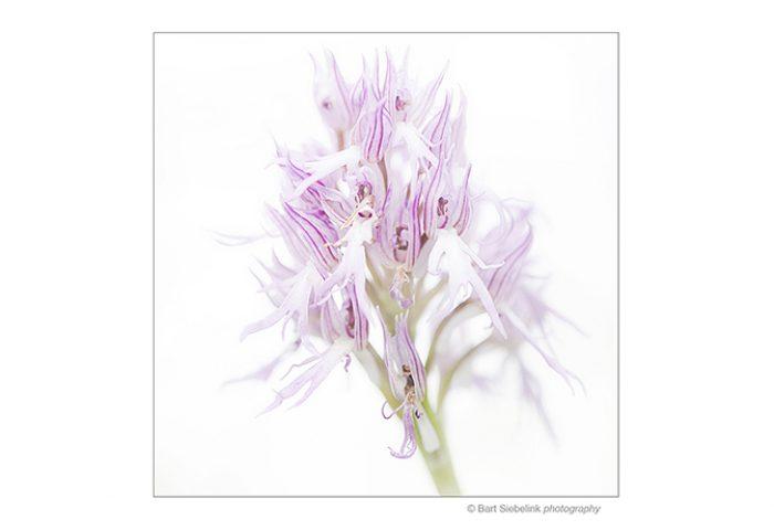 Hoe krijg je orchideeën zo fijntjes in beeld? Dat leer je op deze reis.