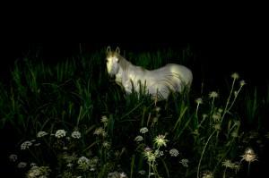 Mystery–Horse©BartSiebelink