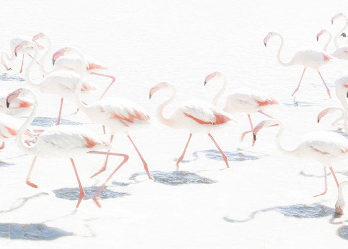 Voorbijlopende flamingo's op het water. Door het 'wegflitsen' van de achtergrond komen de zalmroze veren goed tot hun recht en kleuren de schaduwen op het water fraai blauw. 70mm, 1/160s, f22, ISO 400, flits. Foto: Bart Siebelink