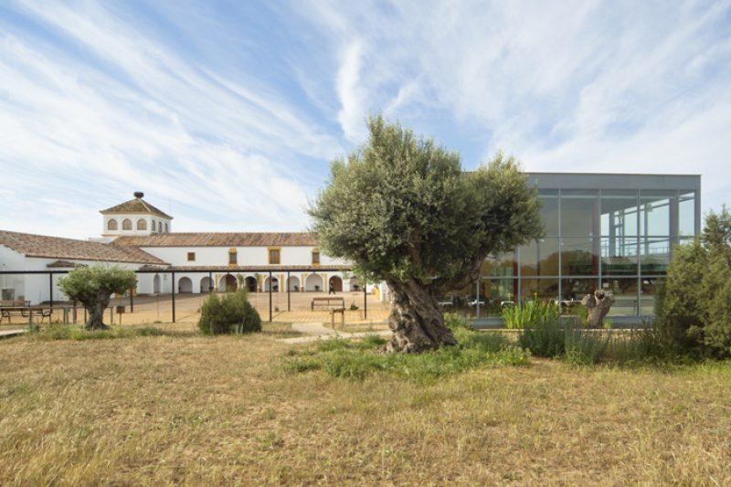 Moorse architectuur met ooievaarsnest temidden van het beste hagedissengebied van de hele Doñana. Foto: Bart Siebelink.