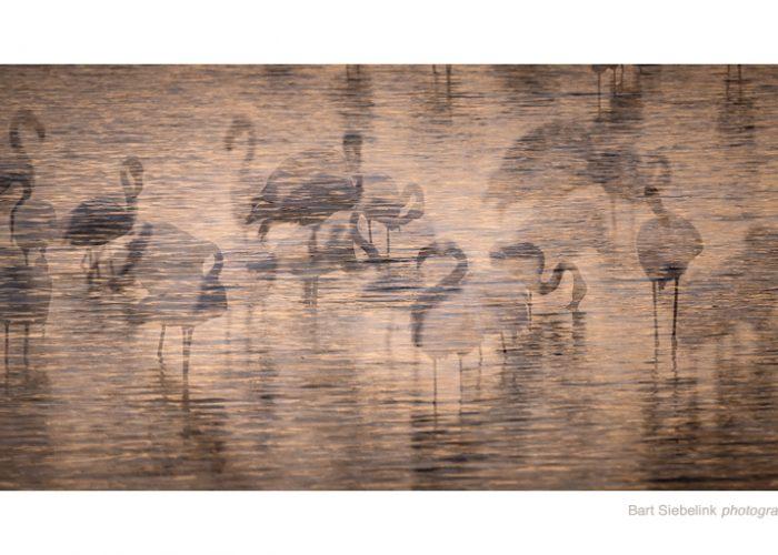 Experimentele dubbelopname van flamingo's in het avondllicht. Foto: Bart Siebelink