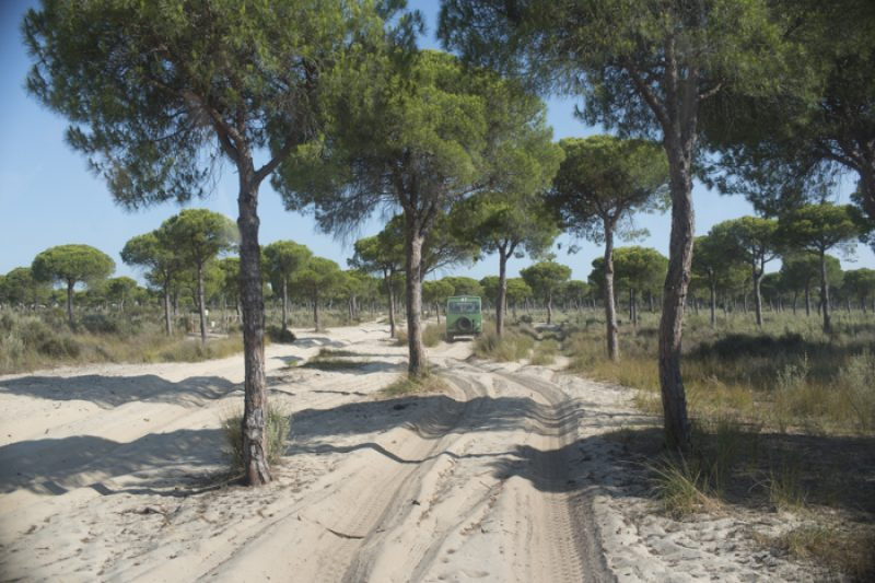 De duinen vormen een spectaculair ecosysteem, met een bijzondere rol voor de Parasolden.