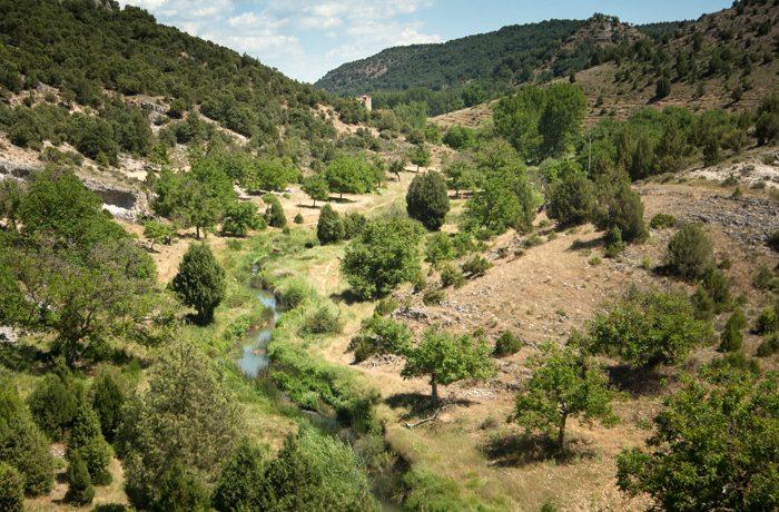 De omgeving: pastoraal landschap met beek en jeneverbes.