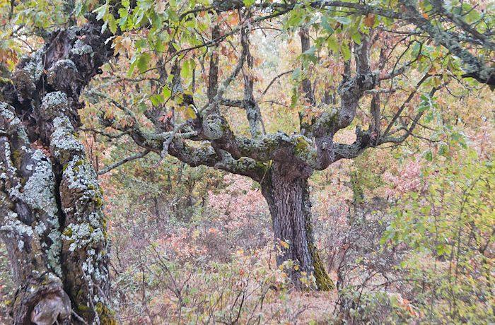 Majestueuze bomen kom je hier tegen, fraai omgeven door herfstkleuren.