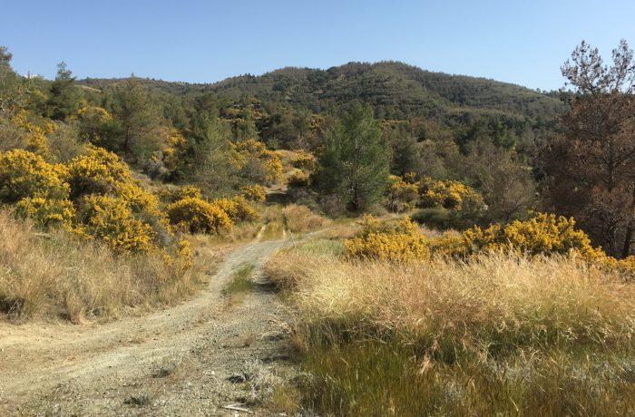 Impressie van het landschap tijdens het voorjaar met bloeiende brem.
