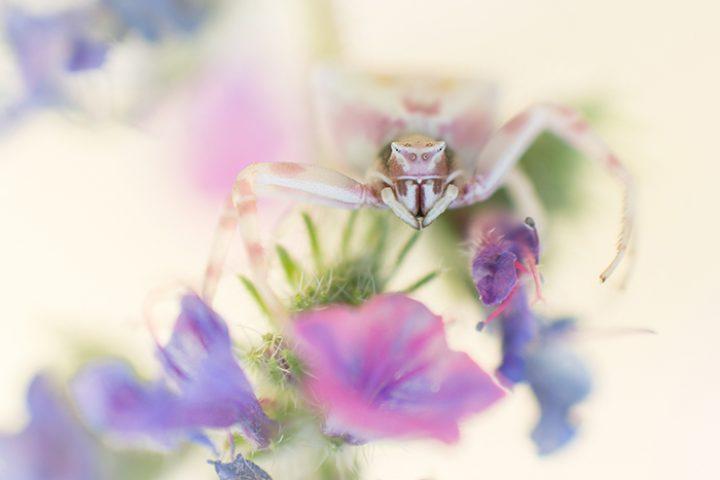 Zie jij de spin? Dit portret is gemaakt met behulp van een tussenring.tten maken.