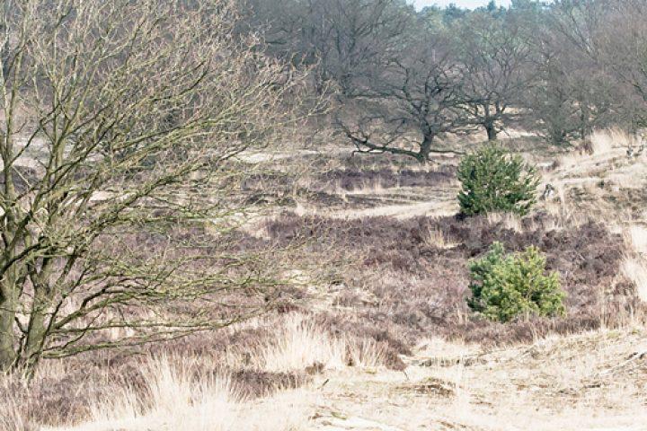 Extreme scherptediepte komt vaak van pas bij vastleggen van landschappen met veel details.
