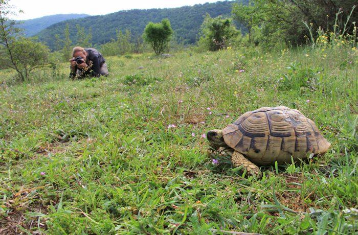 Griekse landschildpad in zijn omgeving. 17mm, 1/25s, f22, ISO 200, statief. Foto: Marjo Snellenburg