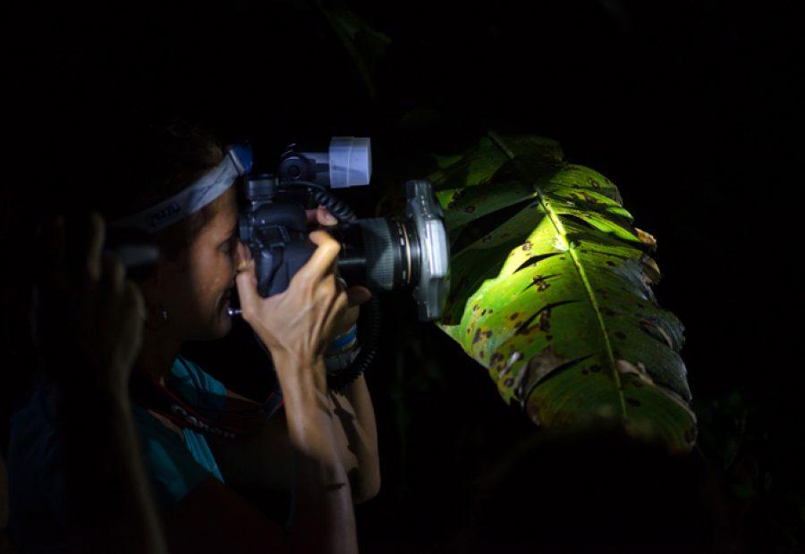 's Nachts fotograferen in het veilige, besloten oerwoud, deze reis maakt het mogelijk.