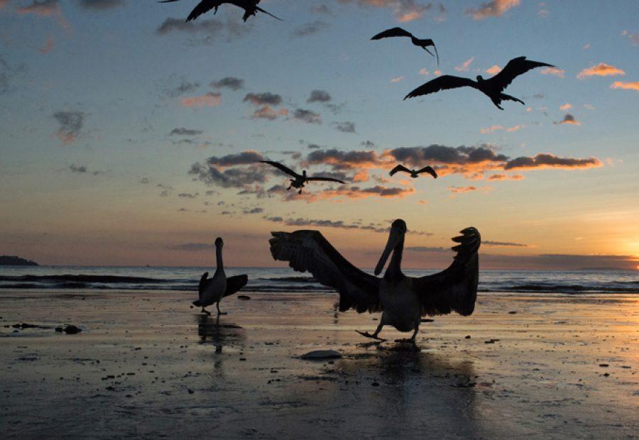Spectaculaire zonsondergangen met imposante pelikanen en fregatvogels.