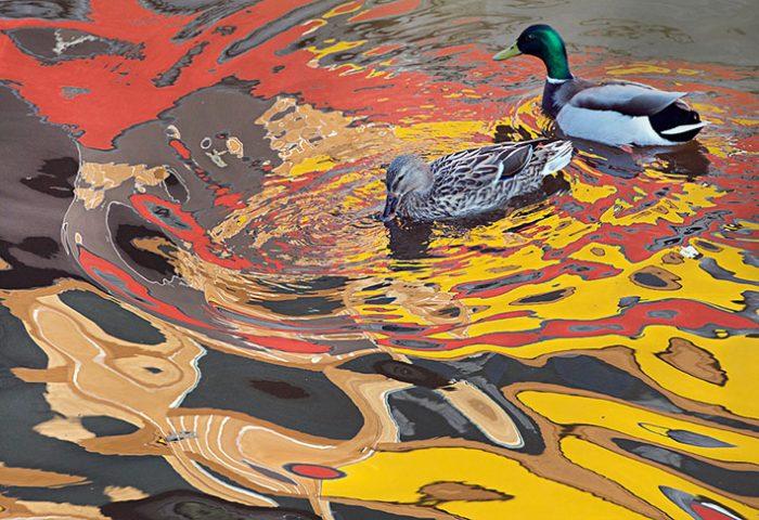 LR_geelrood-Water-vogels@BartSiebelink-4