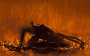 Volcano-©BartSiebelink-800